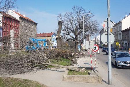 kácení stromů - 05.jpg