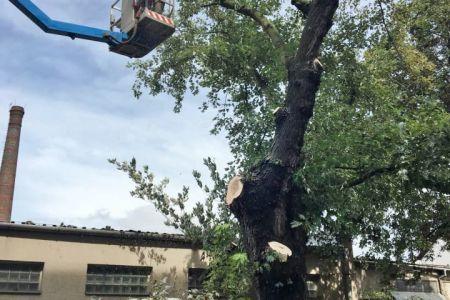 rizikové kácení stromů - 03.jpg